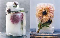 photos by emmanuelle hauguel, Bloom issue 21