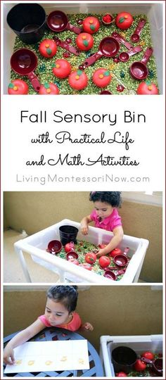 Fall sensory bin with practical life and math activities for multiple ages; post includes YouTube video, information on the DIY sensory table, and Montessori Monday permanent linky collection.