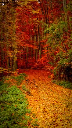 Photograph Road in the forest by Tamas Filep ( ArtoFTom ) on Beautiful World, Beautiful Places, Beautiful Pictures, Beautiful Nature Wallpaper, Beautiful Landscapes, Fall Pictures, Nature Pictures, All Nature, Amazing Nature
