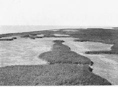 Noordoostpolder: Schokland. De westkust, gezien vanaf de vuurtoren 1933. Dr. J.H. Schuurmans Stekhoven Jr.: 'Schokland' in 'De Wandelaar' 1-1934.   Fotocollectie Nieuw Land, Directie Wieringermeer, Hiemstra.