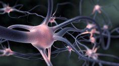 Margie's Journal: Parkinson's Information: Researchers create stem cell model of Parkinson's ...