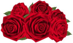 Beautiful Dark Red Roses PNG Clipart Image
