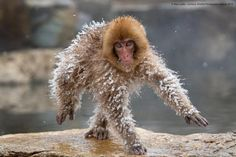 18 Funny Animals Photos from the Wildlife Comedy Photography Awards 2019 Comedy Wildlife Photography, Photography Contests, Photography Awards, Wild Life, Funny Animal Photos, Funny Animals, Animal Pics, Image Hilarante, Vida Animal