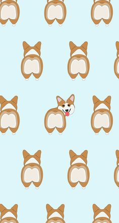 Here are some free wallpapers so you can surround yourself with your favourite dogs. A corgis wallpaper, a dachshunds wallpaper, and even some corgi butts!
