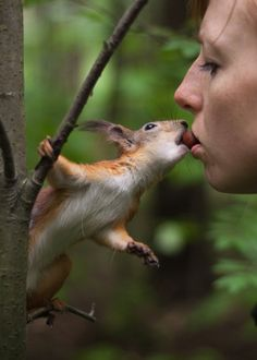 A human and a Red Squirrel sharing an acorn -- not something you see every day.