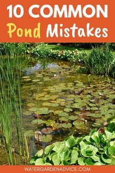 Backyard ponds can be expensive to install and difficult to fix if you don't build them right the first time. Here are 10 common garden pond mistakes to avoid. Outdoor Fish Ponds, Fish Ponds Backyard, Backyard Water Feature, Ponds For Small Gardens, Fish Pond Gardens, Koi Fish Pond, Small Ponds, Outdoor Water Features, Pond Water Features