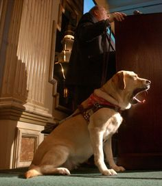 Roselle, guide dog who led her owner Michael Hingson down 78 floors from the WTC on 9/11
