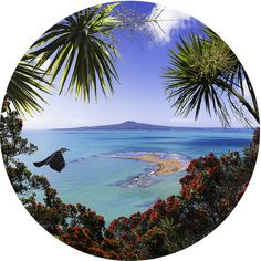 Image result for nz beach scenes panoramic