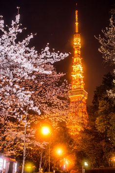 Sakura and Tokyo Tower Busan, Tokyo Tower, Places To Travel, Places To Go, Tokyo Night, Sakura, Island Nations, Adventure Is Out There, Tokyo Japan