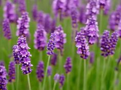 Flores para cultivar en primavera y verano - http://www.jardineriaon.com/flores-para-cultivar-en-primavera-y-verano.html