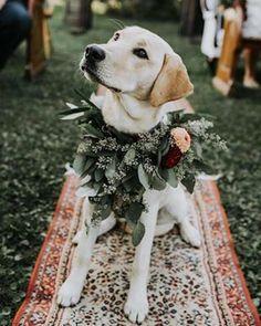 & the first on our wedding guest list is. Wedding Guest List, Dog Wedding, Wedding Goals, Wedding Pictures, Fall Wedding, Wedding Planning, Dream Wedding, Elegant Wedding, Wedding Ceremony