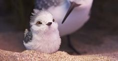 Pixar's Latest Short Film 'Piper' Is The Cutest Thing You'll See All Week