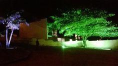 iluminação na vegetação.