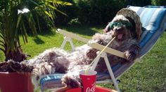 Yo, noch ne Cola bitte! Und dann kauf mir doch noch schnell ne Hundeleine von Schröders Hund. www.schroedershund.de