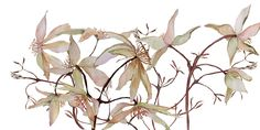 Artist: Catharine (Deep Cove Flowers). Entwined. Watercolor.