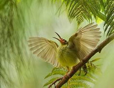 Mummy I'm Down here, and Hungry! Photo and caption by Bjorn Olesen It had been an unusually quiet morning in the montane pine and fern forest close to the Borneo Highland Resort in Sarawak, Malaysia. Photography Competitions, Photography Contests, Wildlife Photography, Photography Blogs, Photography Awards, Animal Photography, Amazing Photography, Fotos Wallpaper, Bird Wallpaper