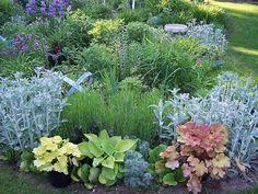 shade garden. left to right: Lamb's Ear (silver), Tiramisu Heuchera, hosta, Wormwood, caramel Heuchera, Lamb's Ear
