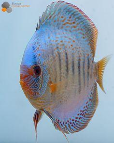 Edderx #tropicalfishaquariumfreshwater