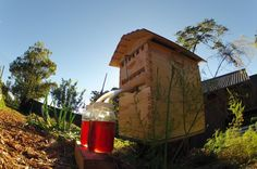 New Beehive Lets Honey Be Harvested Without Disturbing Bees   IFLScience
