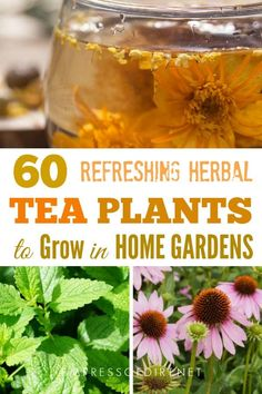 a list of leaves flowers fruits seeds and roots to produce delicious homemade teas. Here's a list of leaves flowers fruits seeds and roots to produce delicious homemade teas. Herb Garden Design, Diy Herb Garden, Edible Garden, Herbs Garden, Garden Ideas, Growing Tea, Growing Herbs, Growing Vegetables, Herbal Plants