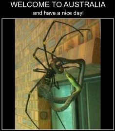 scary animal stuff Eriksson Eriksson Eriksson Eriksson Eriksson Eriksson Pope would die if she saw the spider heheh lol Lol Memes, Stupid Funny Memes, Funny Relatable Memes, Haha Funny, Funny Cute, Scary Funny, Hilarious, Most Deadly Animal, Deadly Animals