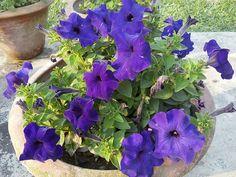 Plants, Photography, Photograph, Fotografie, Photoshoot, Plant, Planets, Fotografia