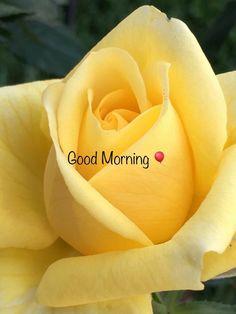 Good Morning With Flower. Good Morning Beautiful Flowers, Good Morning Images Flowers, Good Morning Roses, Good Morning Beautiful Quotes, Good Morning My Love, Good Morning Friends, Morning Pictures, Morning Wish, Beautiful Monday