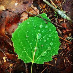 #Kesäsade ja #suomalainen #metsä. / #Summer #rain and #Finnish #forest