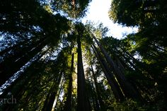 Rang: The Colours of Life.: Muir Woods National Monument, California.
