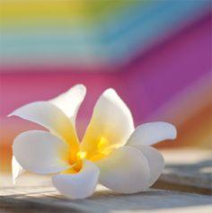 Le Monoï de Tahiti Utilisé depuis des millénaires par les Tahitiennes Actif phare de la gamme solaire Lovea, le Monoï est un véritable secret de beauté. Utilisé depuis des millénaires par les Tahitiennes, le Monoï nourrit, répare, hydrate et protège la peau et les cheveux. Soucieuse des ingrédients qu'elle sélectionne, Lovea a sélectionné le Monoï de Tahiti, appellation d'origine contrôlée, gage d'une qualité et d'un savoir-faire hors du commun.