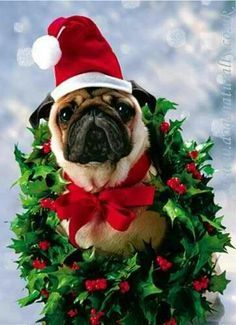 295 Best Christmas Animals Images Christmas Animals