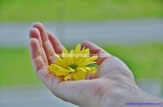 Hand Mudras - Healing Power in your Hands - a great list of hand mudras - the hows and benefits