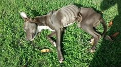 Emaciated stray dog barely able to craw rescued. How could anyone let this happen to this ADORABLE dog?! He/she deserved so much better than this as ALL animals do! Bless this dog's soul and let him/her know that God and I love them very much.