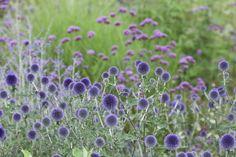 Fleurs et champs sauvages, Eric SANDER