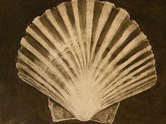 Scallop Shell Charcoal drawing | by julesart24