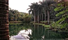 https://flic.kr/p/HcD4ji   INHOTIM . May 2016  16   Inhotim, Museo y parque ecologico natural. Brumadinho, Minas Gerais. Fotografia: Artexpreso . Rodriguez Udias . *Photochrome Artwork Edition / BH, Brasil . May 2016 .. Website: rodudias.wix.com/artexpreso #Inhotim #artexpreso #photochrome #minasgerais #soubh