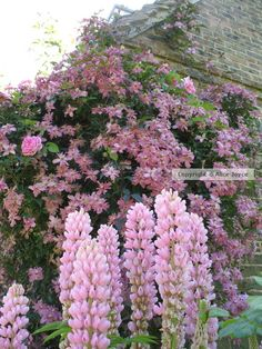 Virginia Woolf's Monk's House gardens