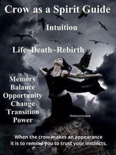 Crow as a Spiritual Guide
