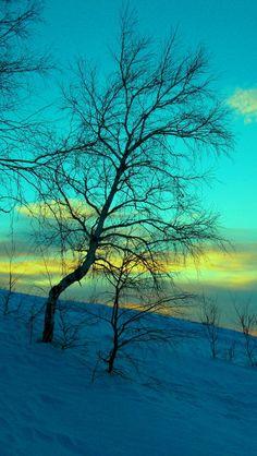 march, winter, snow, frost, nature, cold, evening, february, sky, blue Wallpaper Apple WallpapeprsCraft