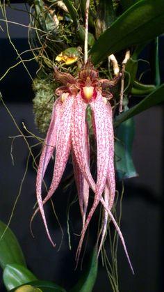 Stunning Orchid! OrchidCraze