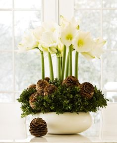 To make a similar centrepiece, you'll need amaryllis bulbs, bunched boxwood branches, and pine cones, all of which should be available at your local florist or nursery. If you want your arrangement to