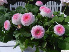 """Aftonbladet har varit hos mig igen.....Denna gång blev det ett """"litet reportage"""" ifrån mitt växthus! Reportaget kan ni läsa om Våren 2010. Välkomna in till min blogg www.husetvidan.blogspot.com. Välkommen! Mums, vad gott det är med jordgubbar i växthuset.... . . ."""