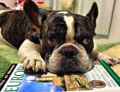 Dog and travel | viajando com cachorro |  cachorros e viagens