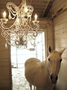 equestrian elegance. if and when I ever have a barn I will put a chandelier in there!