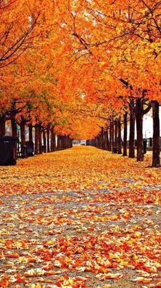 Free Wallpaper Fall Scenes Autumn Landscape Iphone Wallpapers Lock Screen