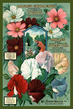 Maules Flowers