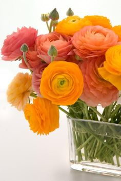 In cooler climates (zones where ranunculus are not winter hardy, the corms are planted in spring for flowers in late summer. In these areas, ranunculus often perform best when they are planted in containers rather than in the garden. Garden Rose Bouquet, Cut Flower Garden, Cactus Flower, Beautiful Flower Arrangements, Floral Arrangements, Exotic Flowers, Beautiful Flowers, Orange Flowers, Cut Flowers