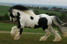 What a powerful horse...... most-beautiful-horse-in-world CC @Ingrid de Zwart