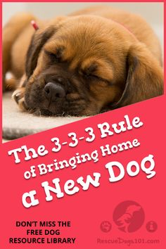 The 3-3-3 Rule of Bringing home your a new rescue dog - 4 things you should do BEFORE picking up your new dog from the shelter and the first 3 Days, 3 Weeks, 3 Months #adoptdontshop #doggies #doglovers #dog #dogadopt #dogadoption #adoptadog #dogstuff #cuteanimals #puppy #doggoals #doghealth #puppylove  #rescuedog  #rescuedogs101