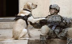 U.S. Army Staff Sgt. Kevin Reese and his military working dog Grek wait at a safe house before conducting an assault against insurgents in Buhriz, Iraq, April 10, 2007. U.S. Army Soldiers from 5th Battalion, 20th Infantry Regiment, 2nd Infantry Division and Iraqi army soldiers from 4th Battalion, 2nd Brigade, 5th Iraqi Army Division are going house-to-house in search for weapons caches and enemy fighters after more than 1,000 residents of this Baqubah suburb were displaced by Al-Qaeda…